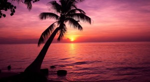 tropic tree sunset