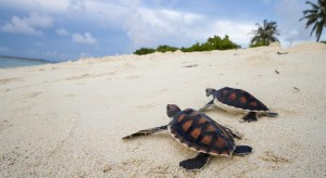 tropic tree turtles